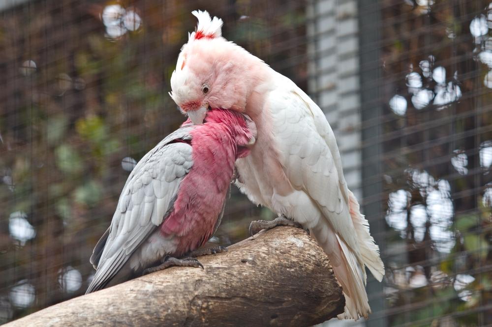 teneriffa_loro_parque_el_must_de_tenerife_puerto_cruz_zoo_10