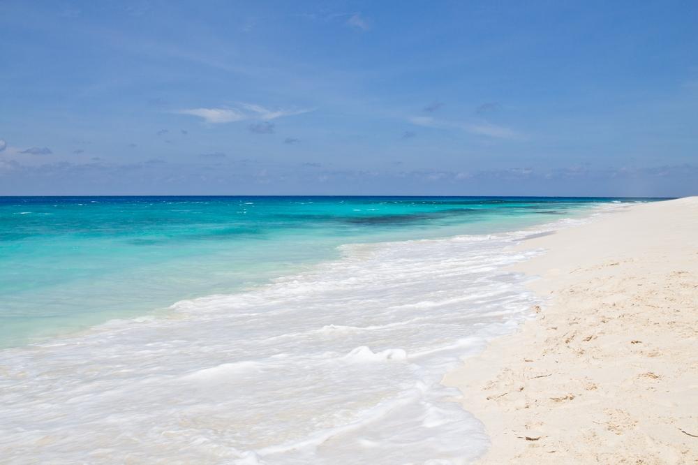 seychellen_aride_island_insel_vogel_naturschutz_strand_traumstrand_kreuzfahrt_silhouette_cruises_sea_bird_04