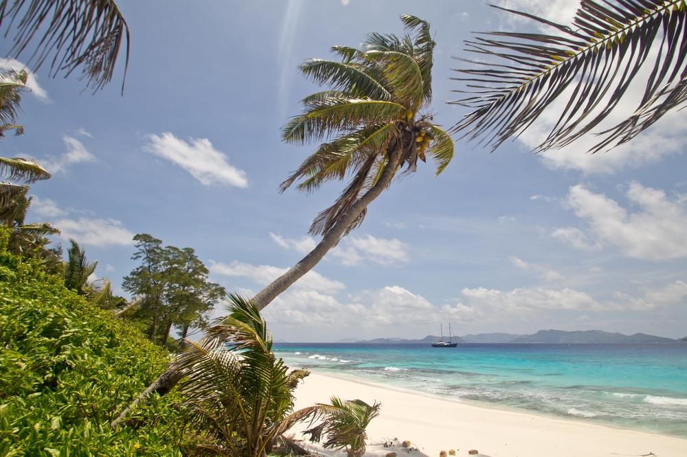 seychellen_aride_island_insel_vogel_naturschutz_strand_traumstrand_kreuzfahrt_silhouette_cruises_sea_bird_16