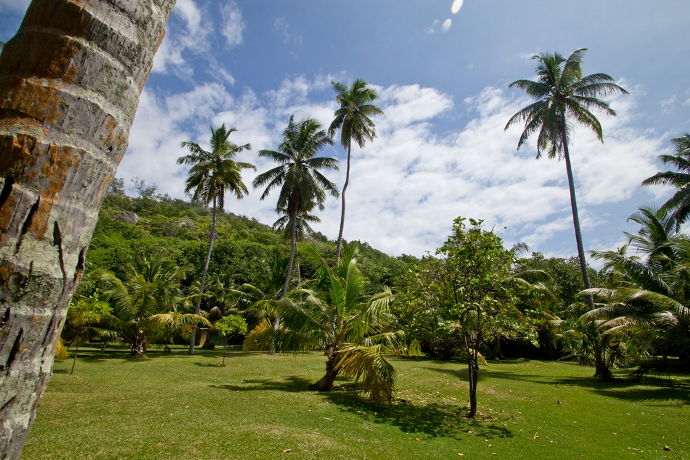 seychellen_coco_island_grande_soeur_sister_islands_schnorcheln_01