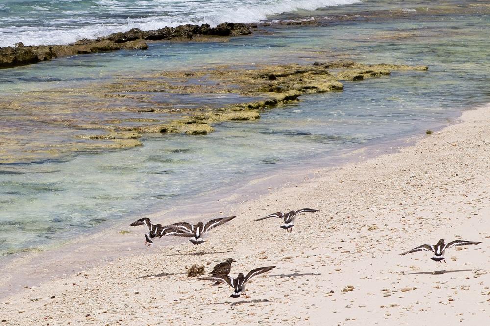 seychellen_coco_island_grande_soeur_sister_islands_schnorcheln_07