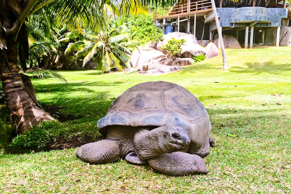 seychellen_coco_island_grande_soeur_sister_islands_schnorcheln_15