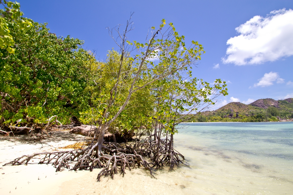 seychellen_curieuse_silhouette_cruises_sea_bird_schildkroeten_turtles_baie_laraie_anse_st_jose_12