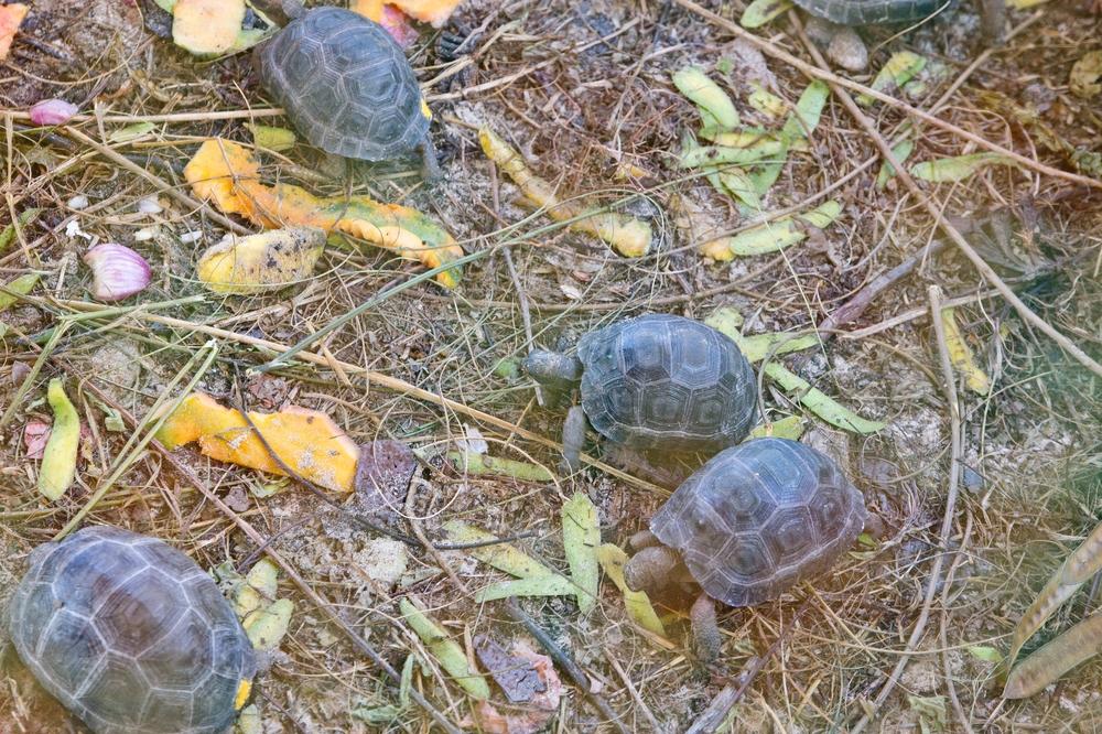 seychellen_curieuse_silhouette_cruises_sea_bird_schildkroeten_turtles_baie_laraie_anse_st_jose_23