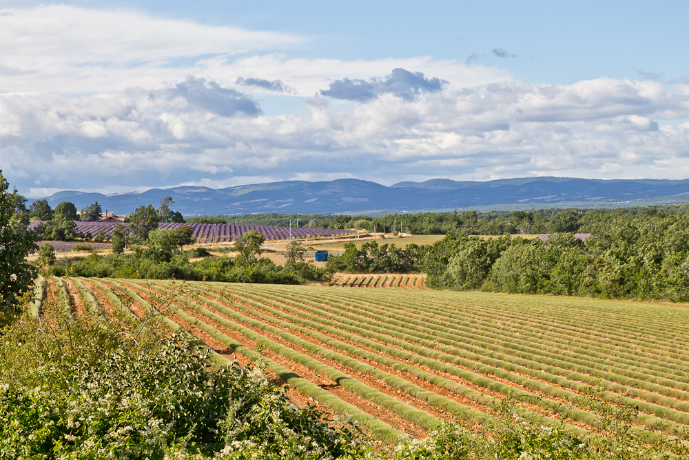 provence_lavendel_feld_gordes_abbaye_de_senanque_12