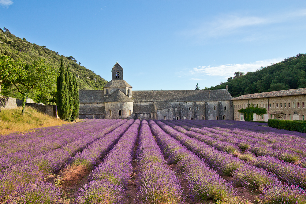 provence_lavendel_feld_gordes_abbaye_de_senanque_13