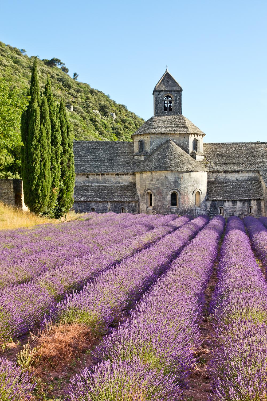 provence_lavendel_feld_gordes_abbaye_de_senanque_15