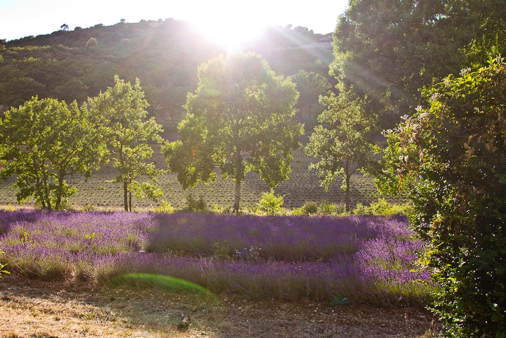provence_lavendel_feld_gordes_abbaye_de_senanque_17
