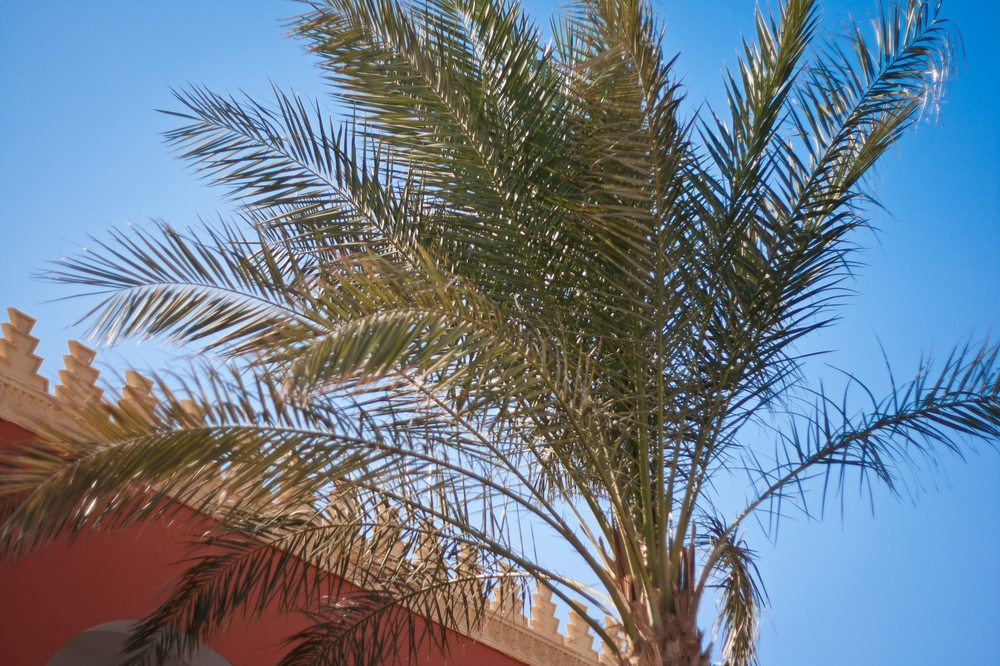 aegypten_alf_leila_wa_leila_holidaycheck_hotel_15