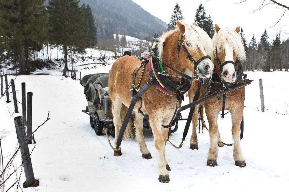 Winter_Schladming_Dachstein_Ski_Rodeln_04