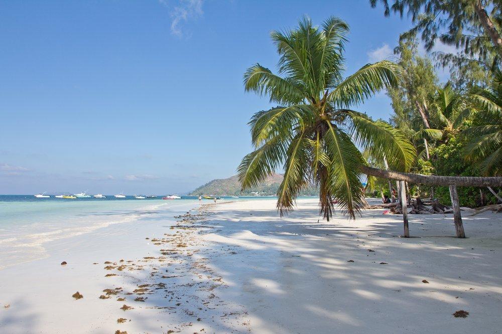 Seychellen_Praslin_Vallee-de-Mai_Coco-de-Mer_Black-Parrot_Cote-d-Or_17