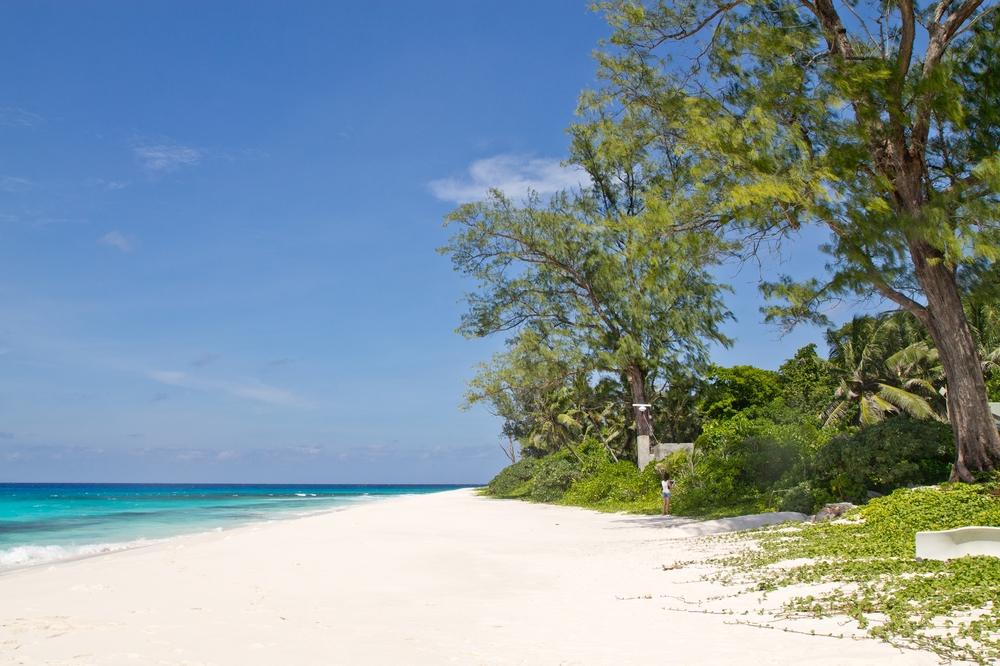 seychellen_aride_island_insel_vogel_naturschutz_strand_traumstrand_kreuzfahrt_silhouette_cruises_sea_bird_03