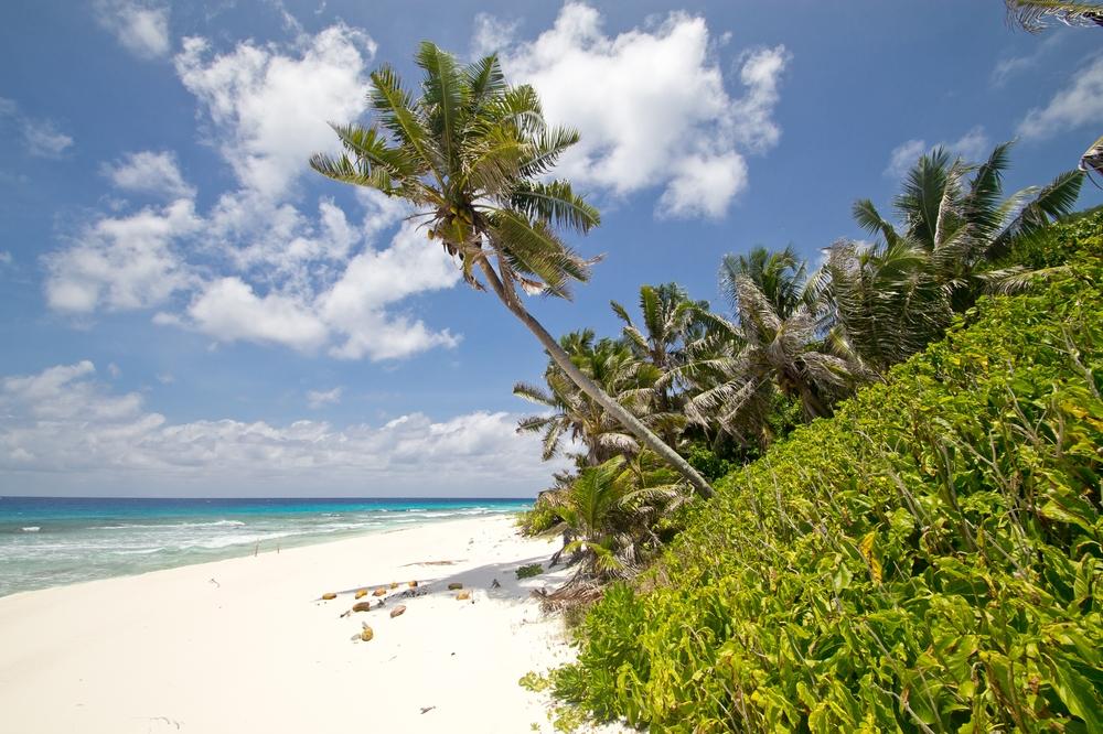 seychellen_aride_island_insel_vogel_naturschutz_strand_traumstrand_kreuzfahrt_silhouette_cruises_sea_bird_17