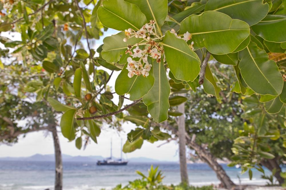 seychellen_coco_island_grande_soeur_sister_islands_schnorcheln_06