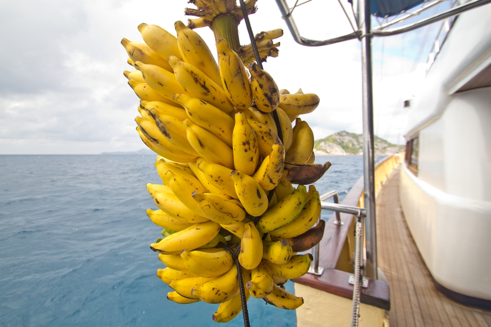 seychellen_coco_island_grande_soeur_sister_islands_schnorcheln_13