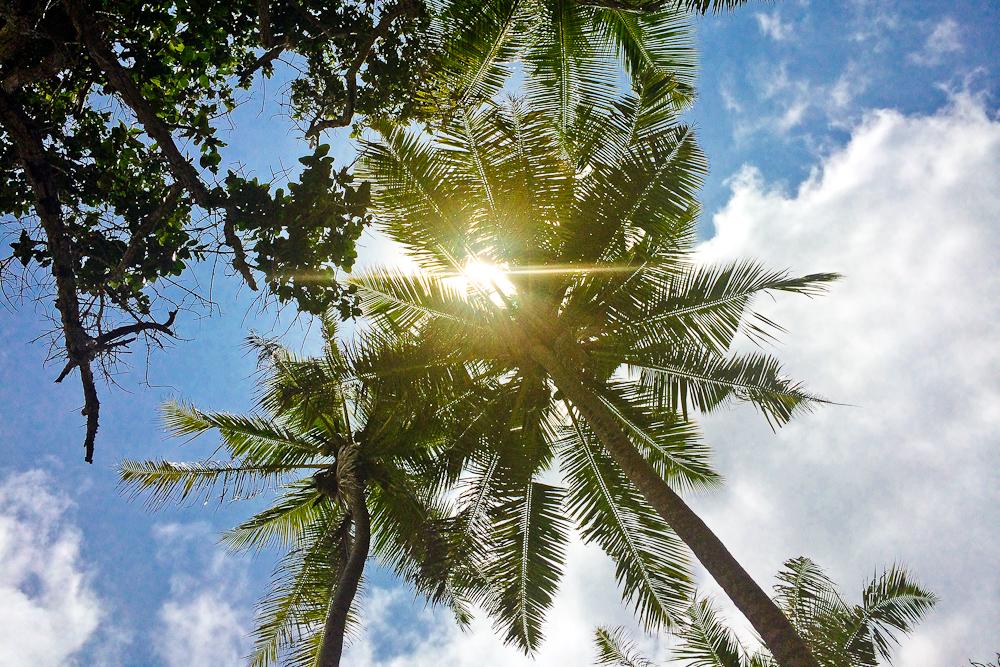 seychellen_coco_island_grande_soeur_sister_islands_schnorcheln_17