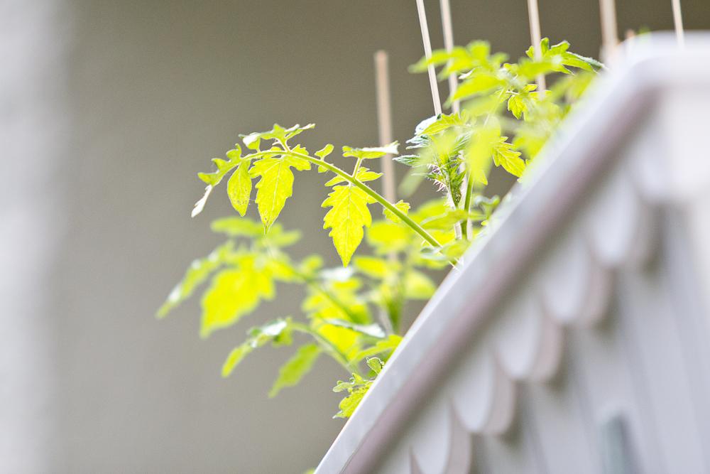 grilen_grillabend_muenchen_balkon_balkonien_campari_negroni_01