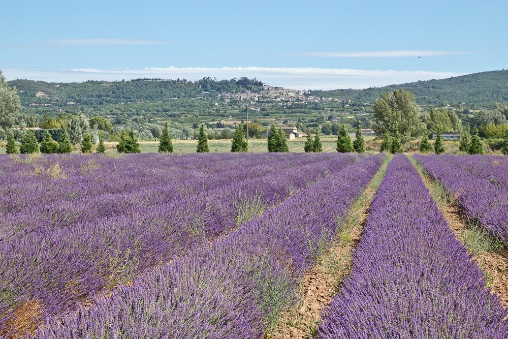 provence_lavendel_feld_gordes_abbaye_de_senanque_03
